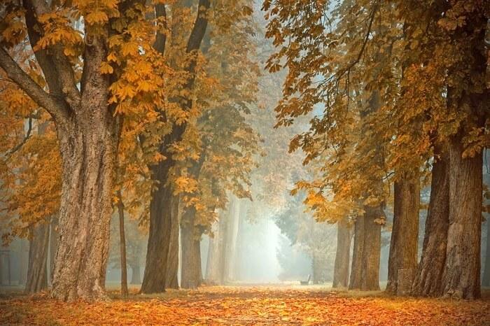 عکاسی پاییزی از منظره