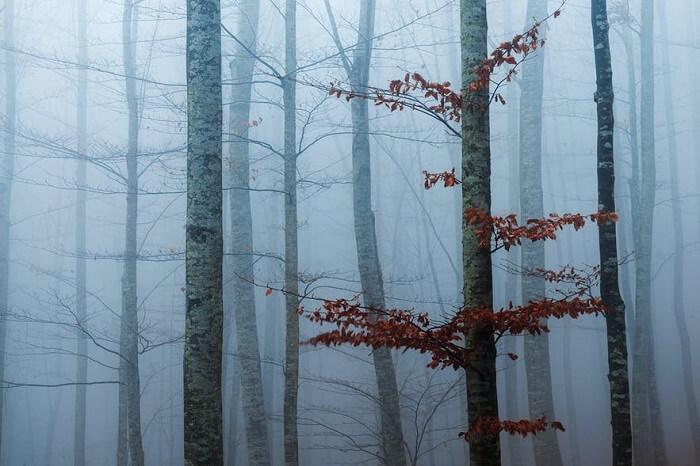 عکاسی پاییزی در مِه