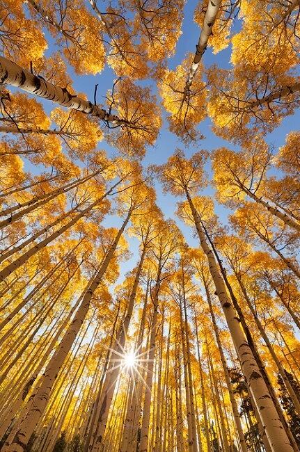 برای عکاسی پاییزی به بالا نگاه کنید و از درختان عکس بگیرید
