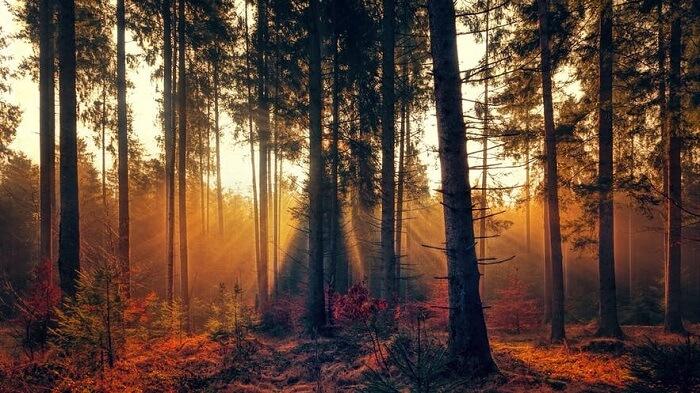 عکاسی پاییزی از پرتوهای نور