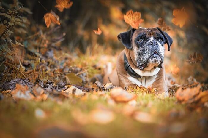 عکاسی از حیوانات خانگی در پاییز